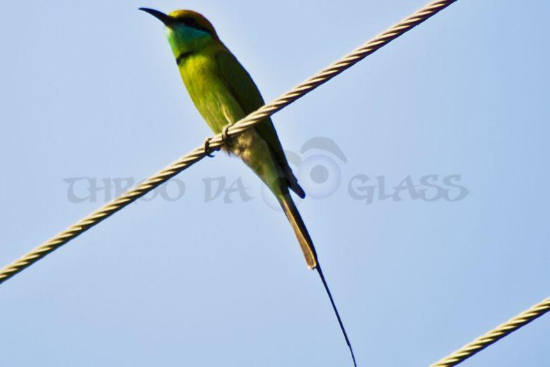 saturday,critter,kingfisher,bird,hampi,pravin,phenomenon,throo da looking glass, karnataka,, saturday