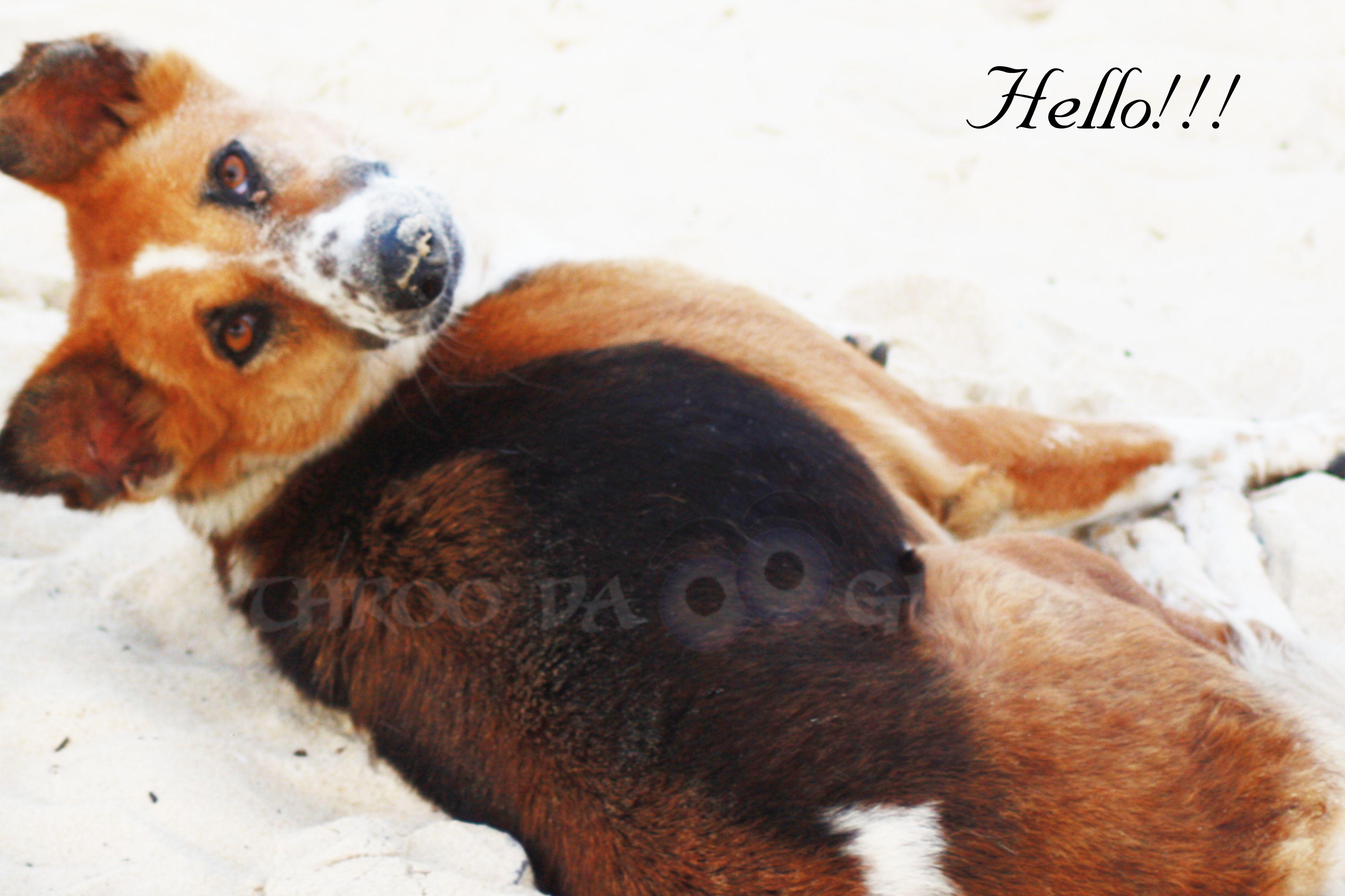 H,hello,sleep,dog,malpe,Udupi,karnataka,beach,pravin,karnataka,throo da looking glass,Bangalore,phenomenon