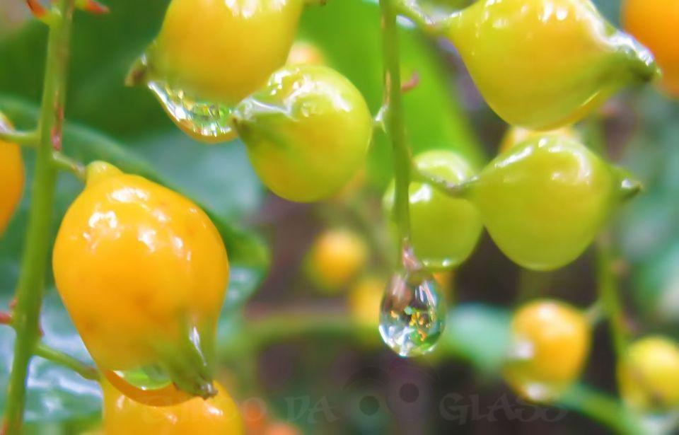 W,waterdrop,nature,chikmagalur,rain,phenomenon,pm,pravs,pravin,bangalore blog,throo da looking glass,karnataka,fresh,drops of rain